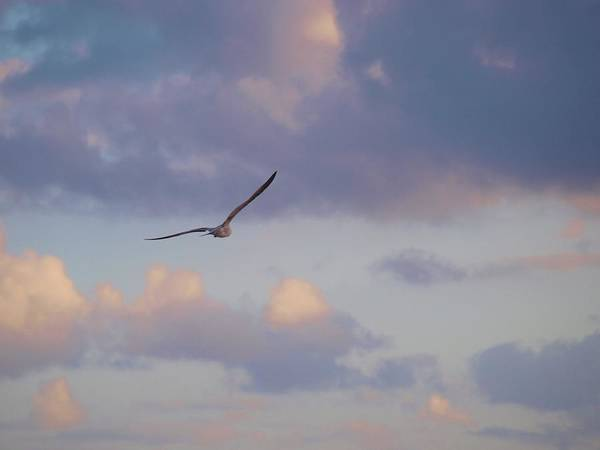 America Art Print featuring the photograph Flying Away by E Luiza Picciano
