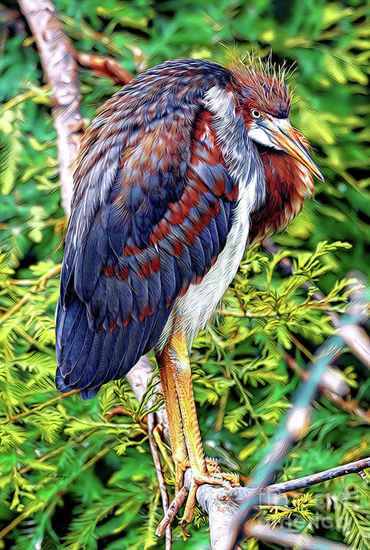 Juvenile Tricolored Heron Art by Bill And Deb Hayes