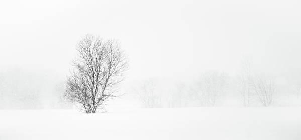Stella Whiteout by Alan Brown