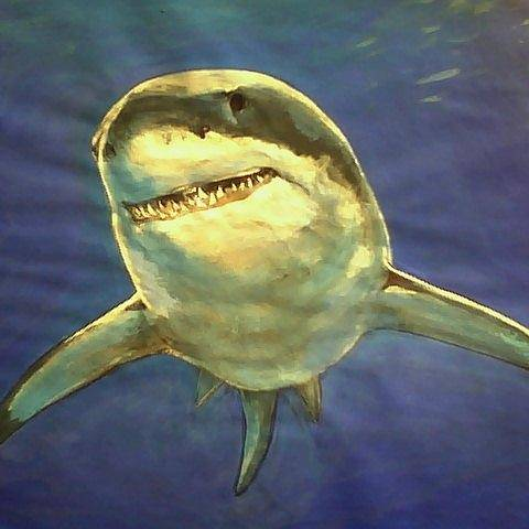 White Shark Paintings (Page #5 of 7)   Fine Art America