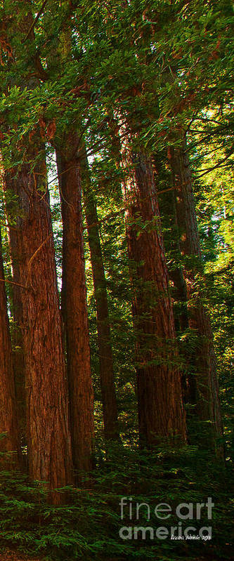 Redwoods Art Print featuring the photograph Redwood Wall Mural Panel Three by Artist and Photographer Laura Wrede