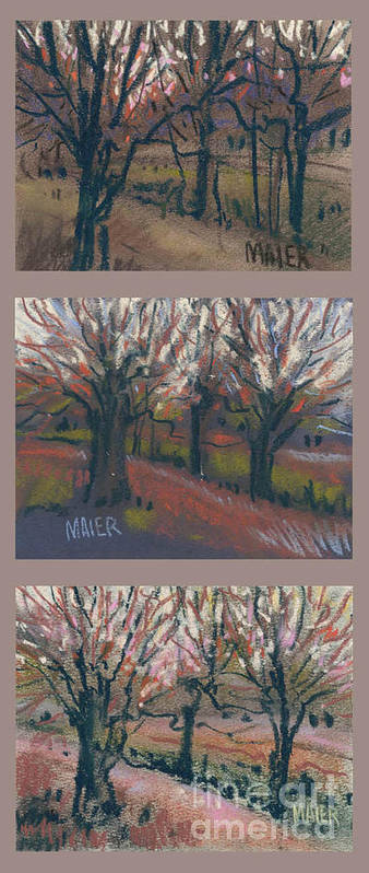 Pastel Art Print featuring the drawing Orchard Sunset by Donald Maier