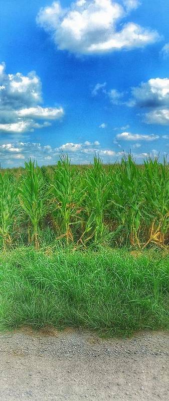 Rural Art Print featuring the photograph Tall Corn by Jame Hayes
