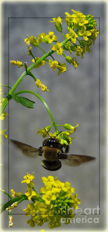 Bee Art Print featuring the photograph Busy Bee by Deborah Johnson