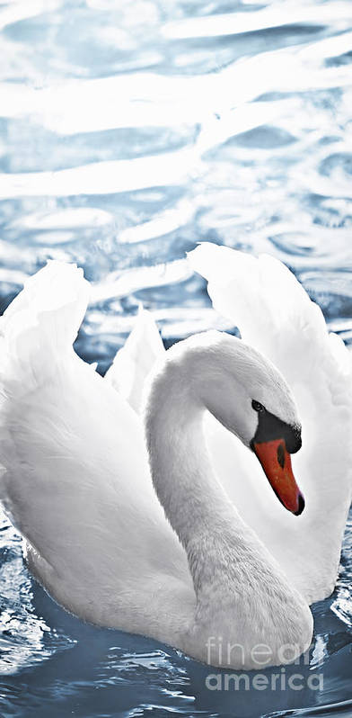 Swan Art Print featuring the photograph White Swan On Water by Elena Elisseeva