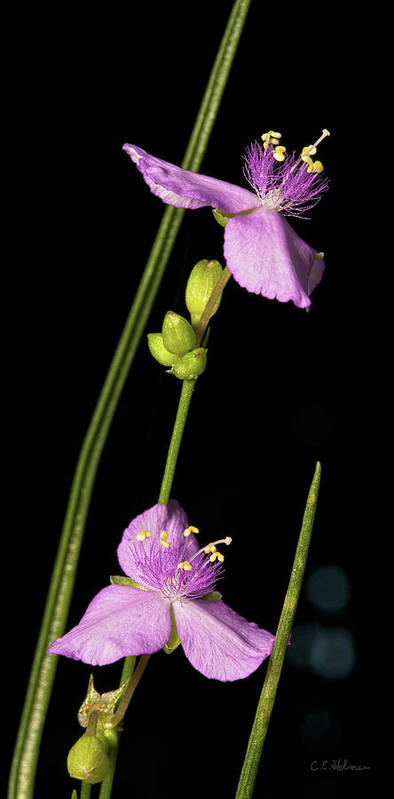 Purple Art Print featuring the photograph Purple by Christopher Holmes