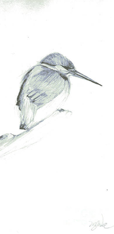A Kingfisher Waiting For Prey- Pencil Drawing Art Print featuring the drawing Still by Mui-Joo Wee