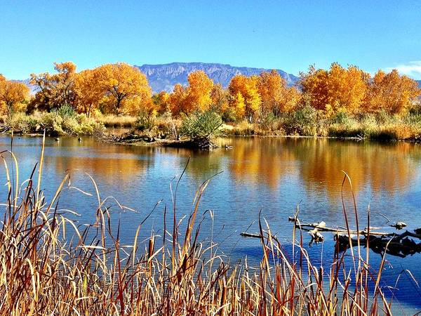 Art Print featuring the photograph Fall's Reflection On The Rio Grande by Vanessa Ortiz