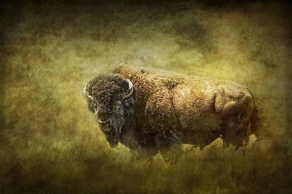 American Buffalo by Randall Nyhof