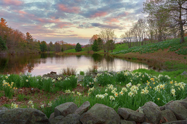 Daffodil Hill Sunset by Bill Wakeley