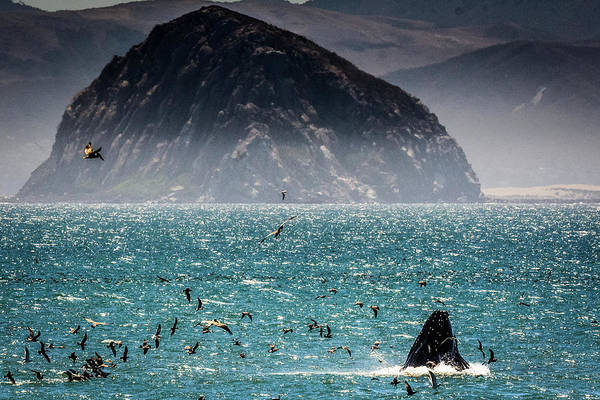 Humpback in Morro Bay by Medi3i Photography