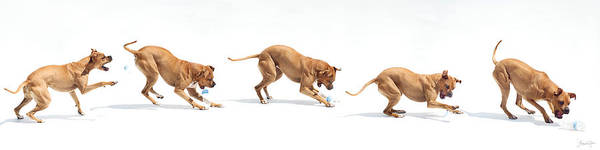 Dog Art Print featuring the photograph Landfill Kill by Bonita Ash