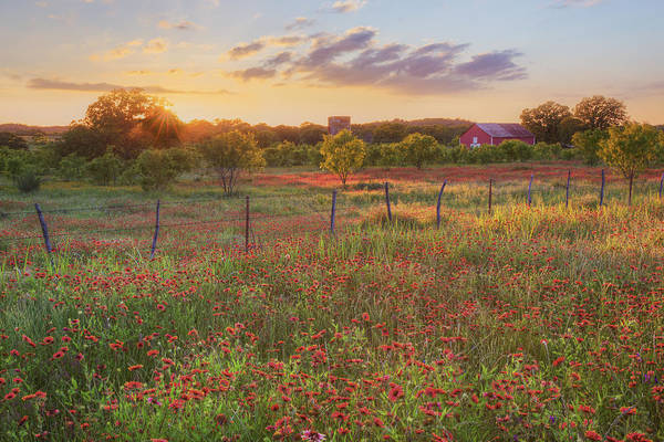 Texas HIll Country Wildflowers at Sunset 1 by Rob Greebon