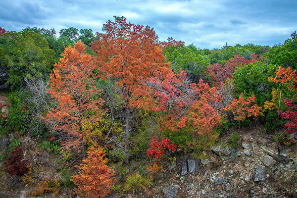 Fall Colors the Hill Counry by Lynn Bauer