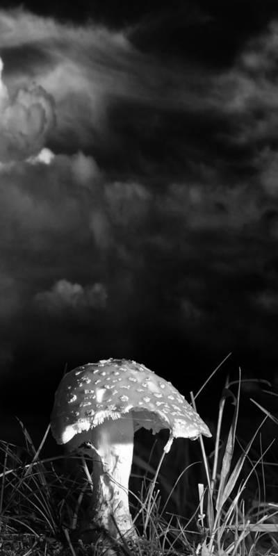 Mushrooms Art Print featuring the photograph Mushroom by Bob Orsillo