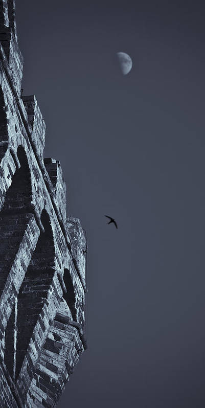 Swallow Art Print featuring the photograph Night Flight by Michele Mule'