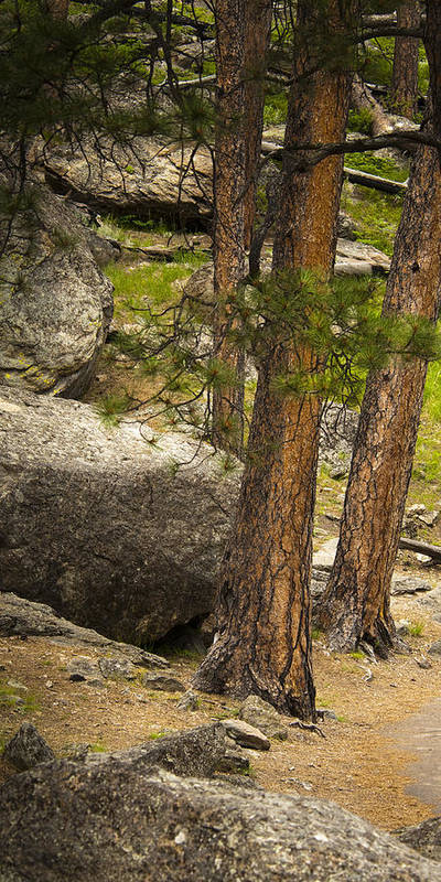 Wyoming Art Print featuring the photograph Devils Tower Trees by Chad Davis