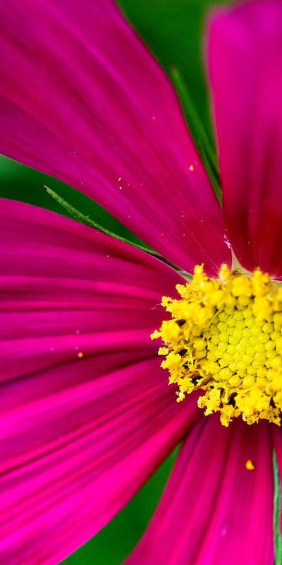 Plink Art Print featuring the photograph Plink Flower Closeup by Michael Bessler