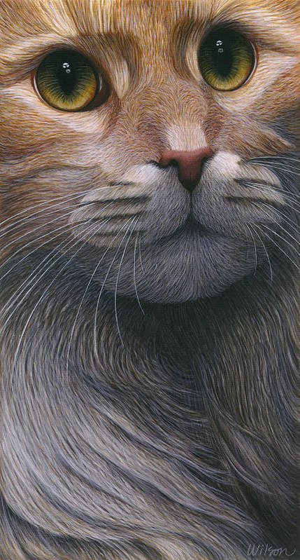 Maine Coon Cat Art Print featuring the painting Cropped Cat 4 by Carol Wilson