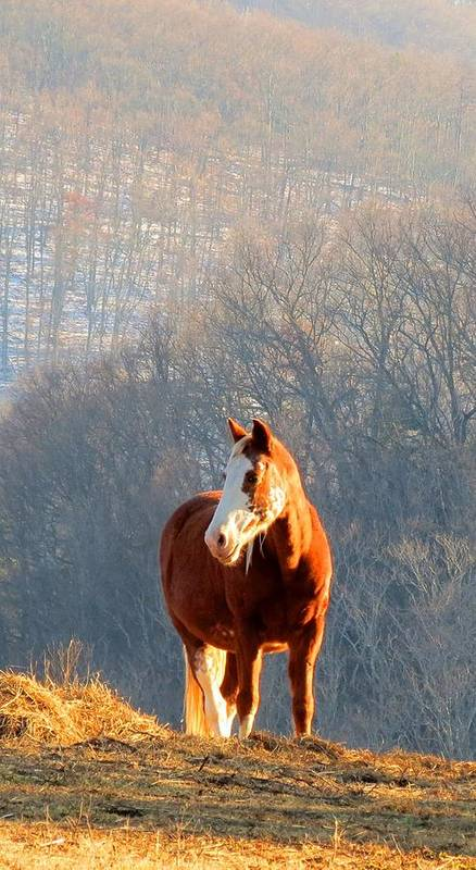 Horse Art Print featuring the photograph Warm Winter Day by Robin Engala