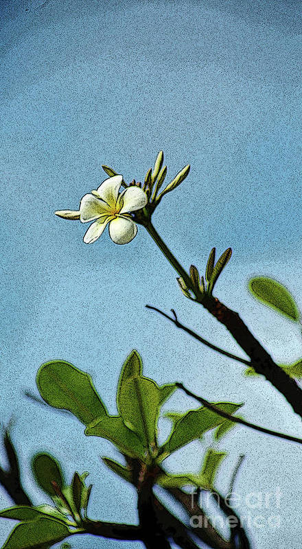 Plumeria Art Print featuring the photograph Open To The Sun by Craig Wood
