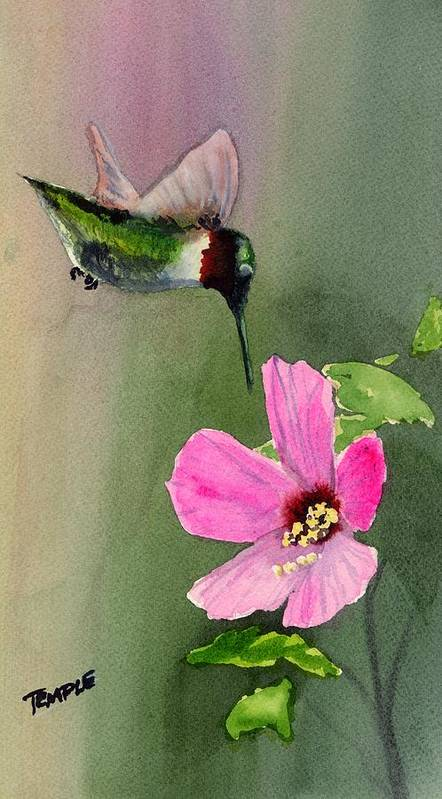 Humming Bird Art Print featuring the painting Ruby Breasted Humming Bird by Paul Temple