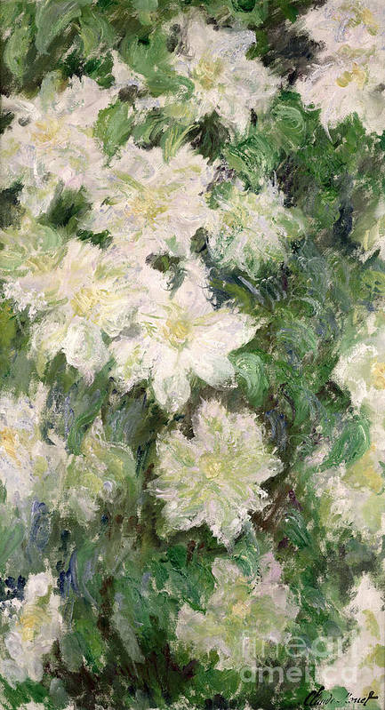 White Clematis Art Print featuring the painting White Clematis by Claude Monet