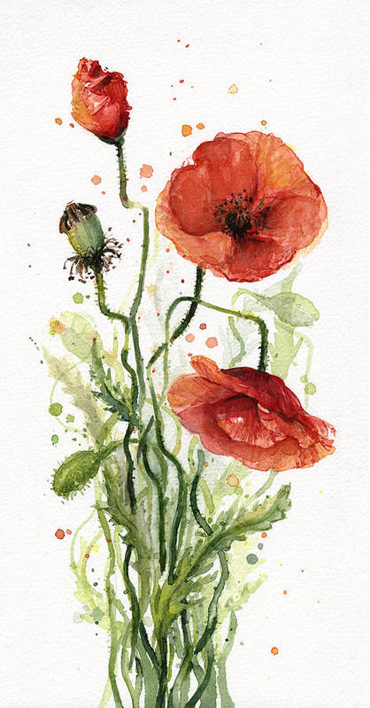 Red Poppy Art Print featuring the painting Red Poppies Watercolor by Olga Shvartsur