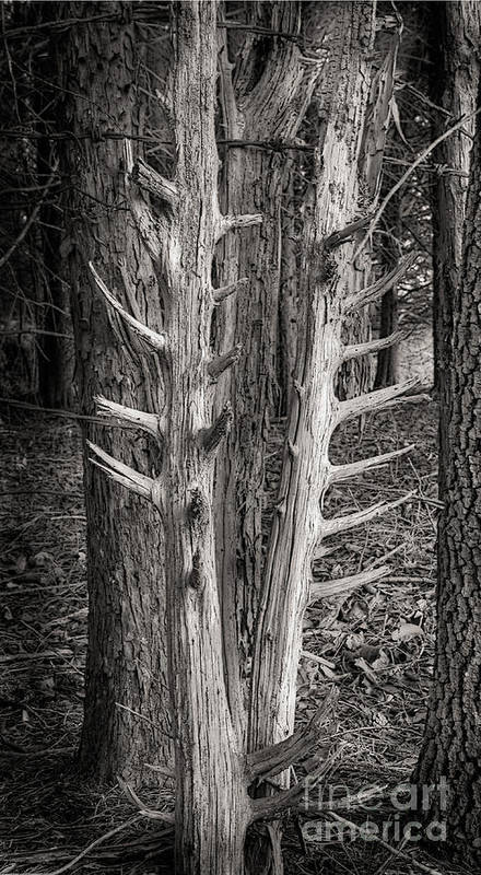 Scotopic Art Print featuring the photograph Scotopic Vision 4 - Trees by Pete Hellmann