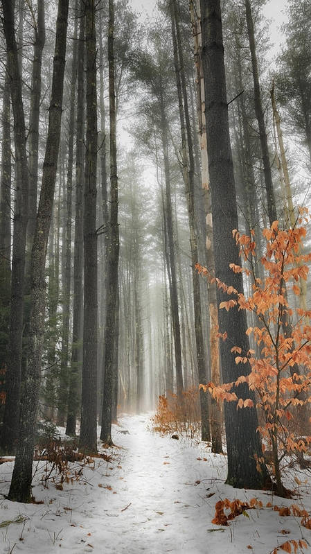 Woods Art Print featuring the photograph A Winters Path by Bill Wakeley