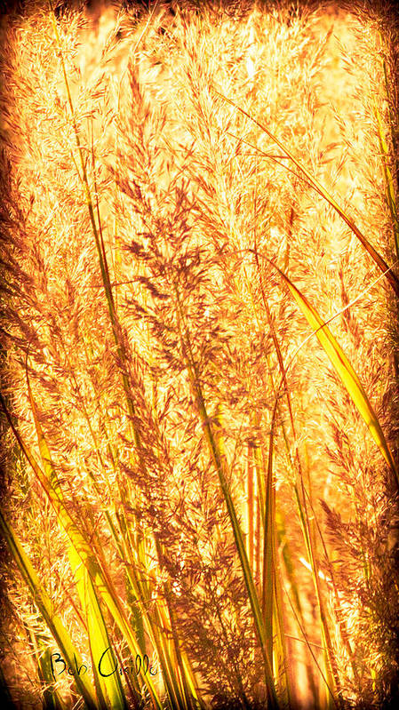 Grass Art Print featuring the photograph Autumns Passion by Bob Orsillo