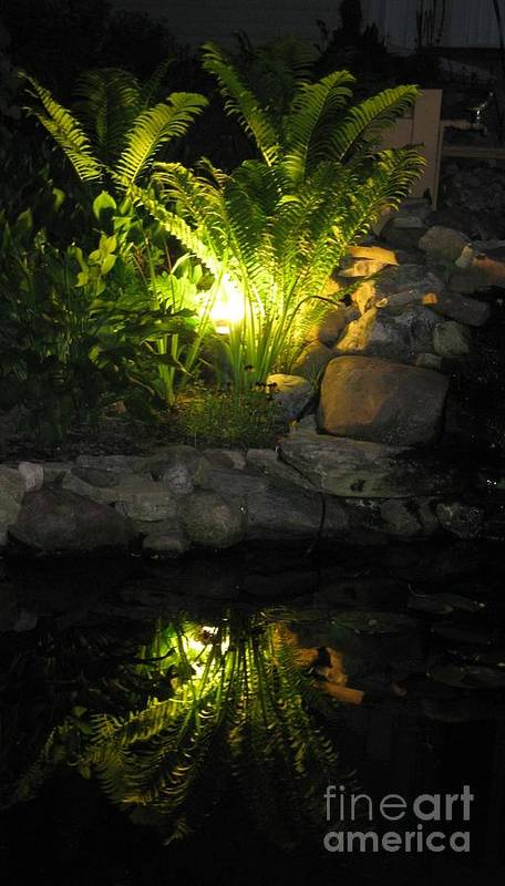 Water Art Print featuring the photograph Nighttime Reflection by Debbie Finley