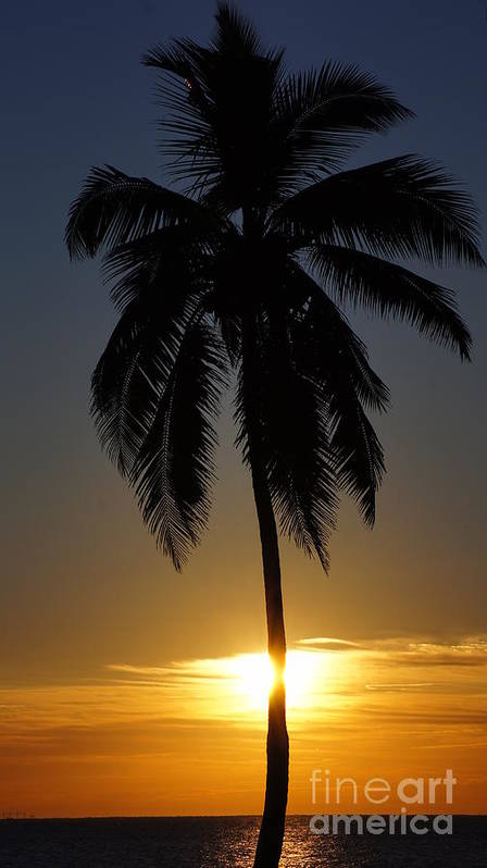 Beach Art Print featuring the photograph Sunrise And Palm Tree by Paul Wilford