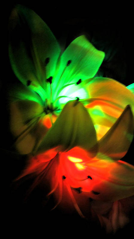 Night Art Print featuring the photograph Night Lights by James Hopkins