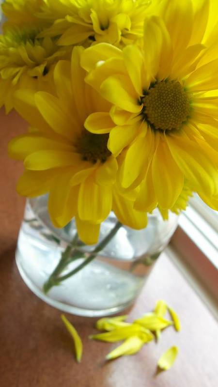 Flowers Art Print featuring the photograph Brunch by Laurel Ransom