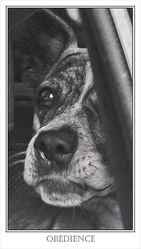 Dog Art Print featuring the photograph Jazz by Karen W Meyer