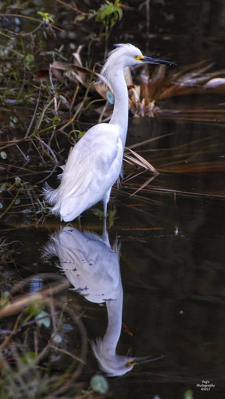 White Egret Art Print featuring the photograph White Egret And Reflection by Peg Runyan