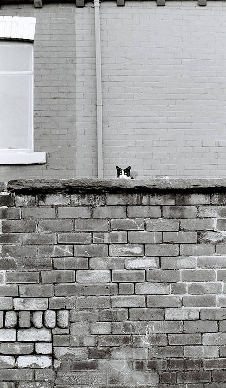 Cat Art Print featuring the photograph Curiosity Of The Cat by Shaun Higson