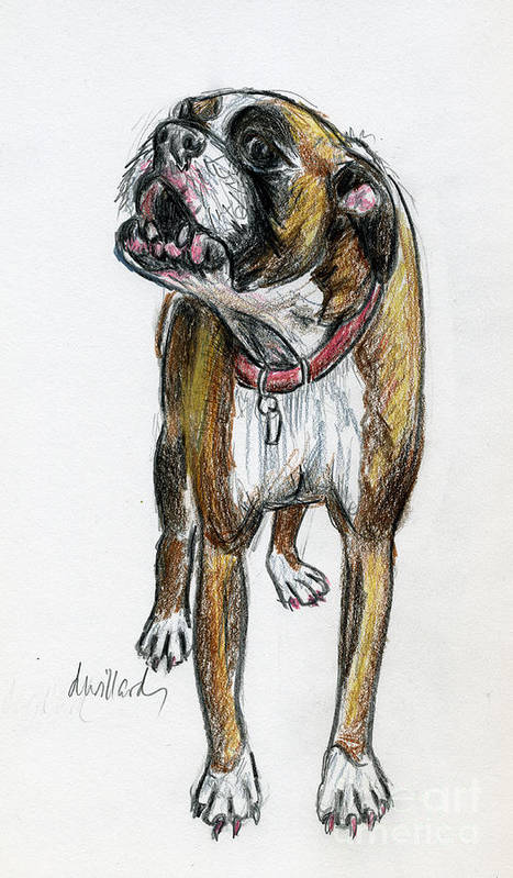 Boxer Art Print featuring the drawing This Boxer Can Sing by Deborah Willard