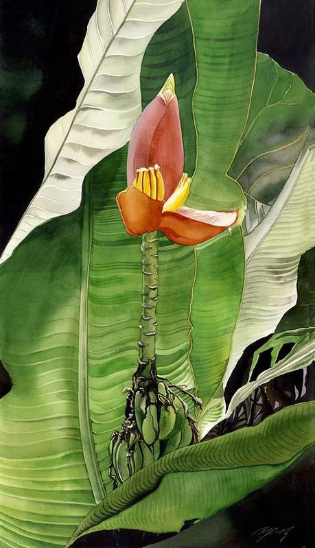 Flower Art Print featuring the painting Banana Blossom by Alfred Ng