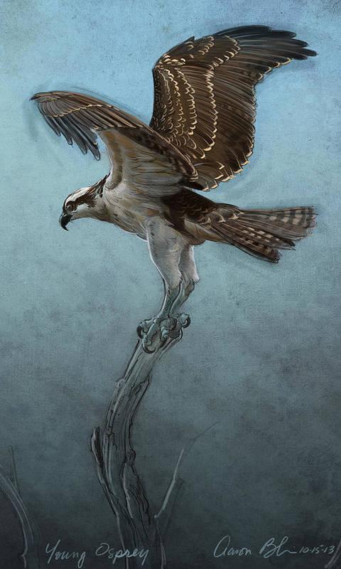 Osprey Art Print By Aaron Blaise
