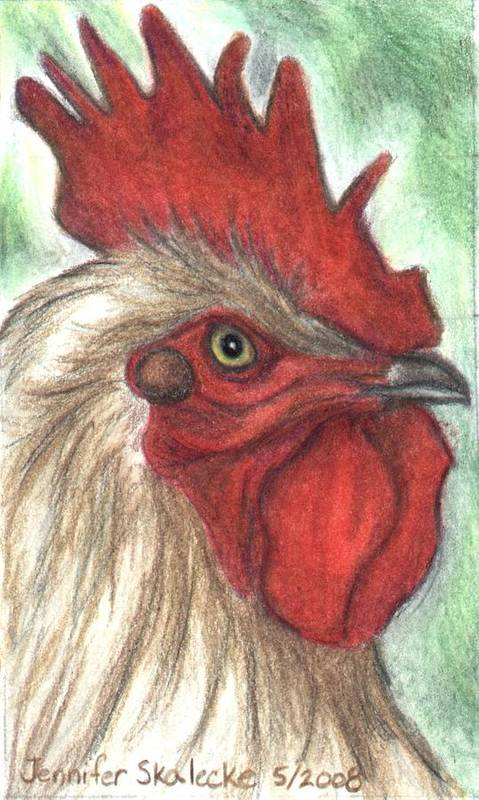 Rooster Art Print featuring the drawing Proud by Jennifer Skalecke