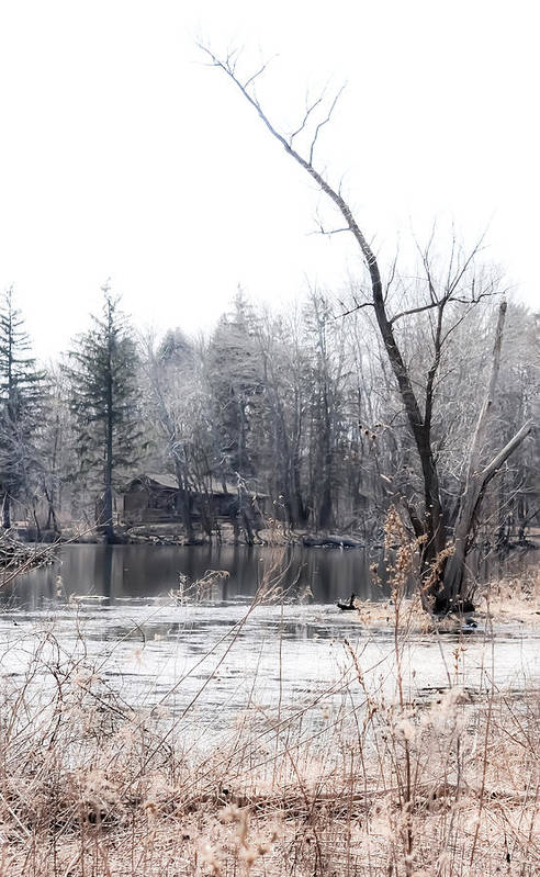 Water Art Print featuring the photograph Cabin In The Woods by Julie Palencia