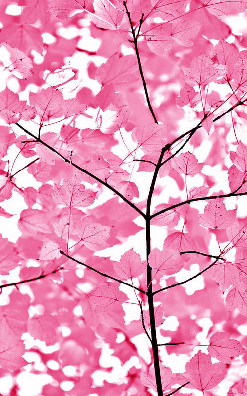 Leaf Art Print featuring the photograph Hot Pink Leaves Melody by Jennie Marie Schell