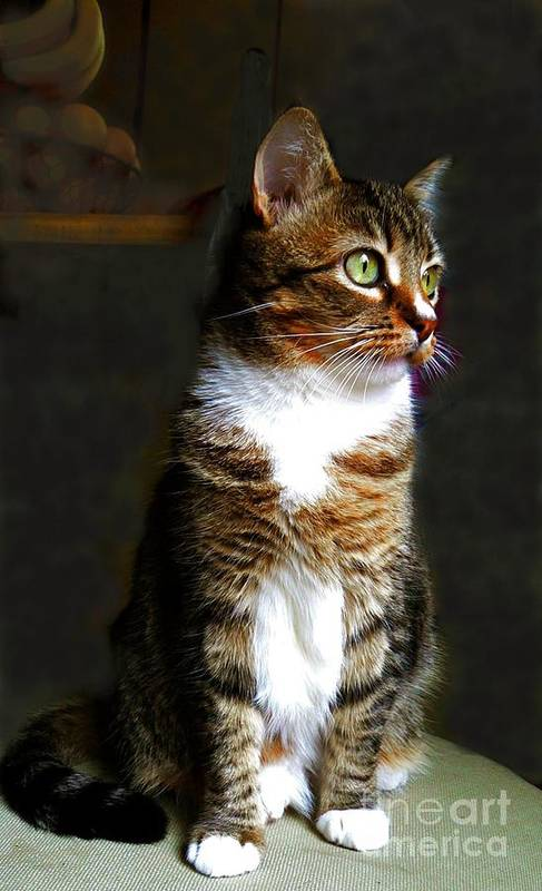 Cat Art Print featuring the photograph Wistful by Diana Besser