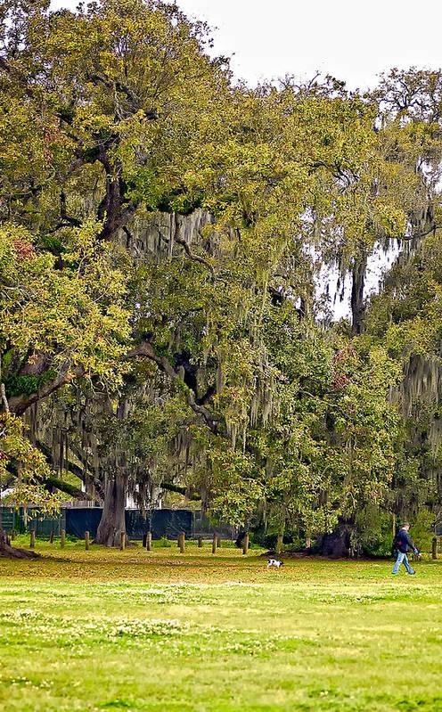 New Orleans Art Print featuring the photograph Audubon Park 2 by Steve Harrington