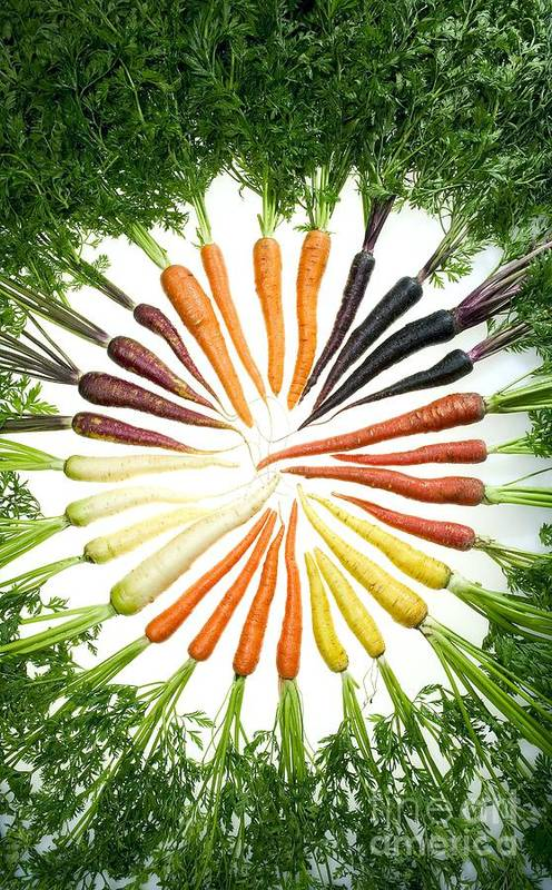 Agriculture Print featuring the photograph Carrot Pigmentation Variation by Science Source