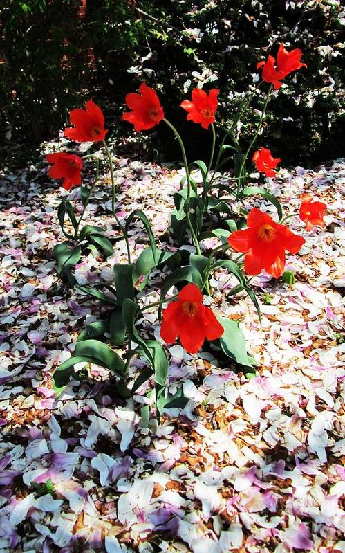 Red Flowers Art Print featuring the photograph Flowers-23 by Todd Sherlock