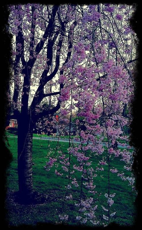 Tree Art Print featuring the photograph Spring Tree by Heather Burbridge