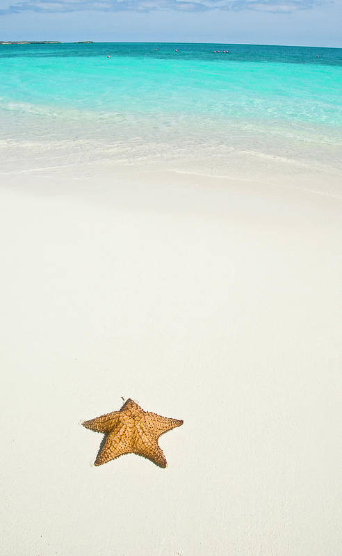 Vertical Print featuring the photograph Tropical Beach And Starfish by Mehmed Zelkovic